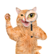 stock-photo-66845611-cat-with-magnifying-glass-and-searching